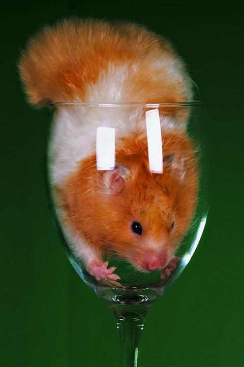 """Mr Hamster says """"get me outta here!"""""""
