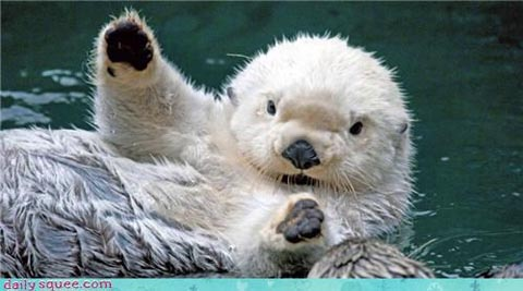 Oh hai Otter from Daily Squee
