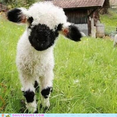 Lambchop via Daily Squee