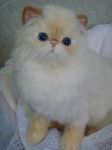 felt cat by sachie2355
