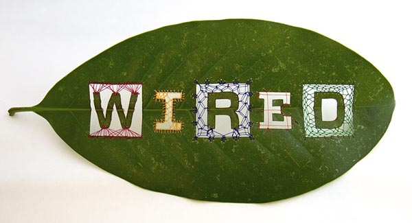 """Wired"" Leaf, by Hillary Waters Fayle"