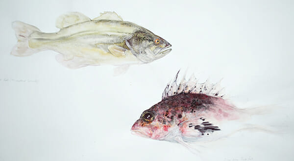 Fish Sketches, by Sally Wilson