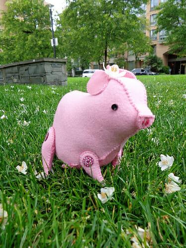 heeere piggy!