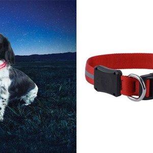 NiteDawg LED Dog Collar | Hundezubehör | MS - Shooting