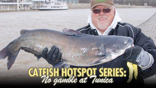 Catfish Hotspot Series: No gamble at Tunica