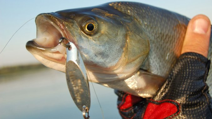 Adding a treble or feathered hook to a jigging spoon — or changing the size of the lure — can make all the difference when fishing winter bass.