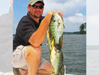 Brad Taylor knows finding bream beds can be the key to catching numbers of huge panfish.
