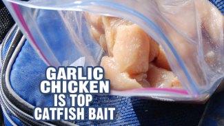 Garlic chicken is top catfish bait