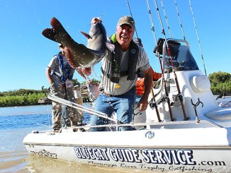 Ken Covington swings a nice blue cat into Capt. Bob Crosby's Blue Cat Guide Service charter boat on the Mississippi River near Vicksburg.