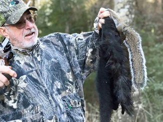 The author shows off a pair fox squirrels (black color phase) and one gray killed with a shotgun near the Mississippi River. The black phase it more prevalent in the Delta Counties.