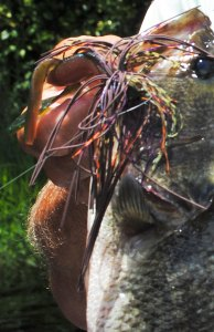 Simple shades of brown and natural colors are often perfect color combos when fishing jigs in late February, especially if you're fishing in relatively clear water.