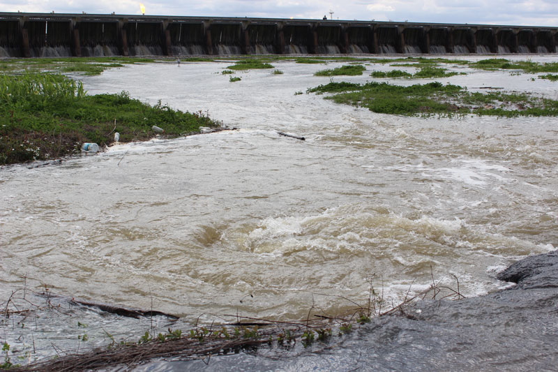 Flow from the Bonnet Carré Spillway on the Mississippi River could be heavy enough to push more speckled trout eastward into Mississippi waters this spring.