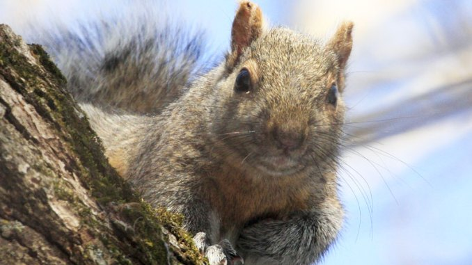 Mississippi's spring squirrel season runs from May 15 to June 1.