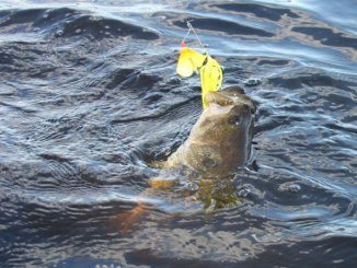 At Ross Barnett Reservoir in May, fish a buzzbait around rocks, pier posts and pilings, trying to draw a reaction strike from a postspawn bass.