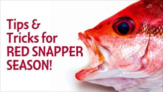 Tips & tricks to land more snapper