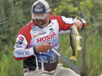Fishing on drop-offs at the ledges and in Ross Barnett's shallow water, you may not catch any monsters, but you should catch plenty of 11/2- to 2-pound bass.