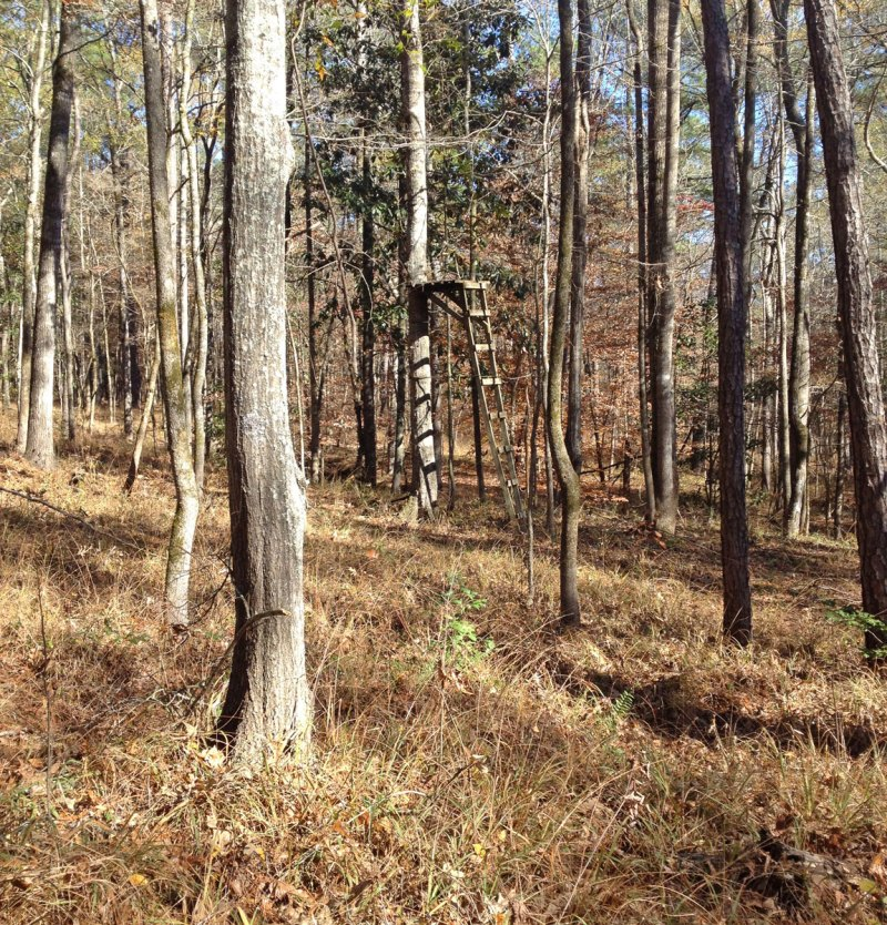Hunters shouldn't assume that the old faithful stand that has always produced will do the same this season. Scout the area and look for deer sign and falling acorns.