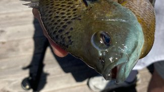 5 great fishing outings for June
