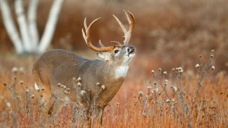 Mississippi rut map can answer lots of deer-hunting questions