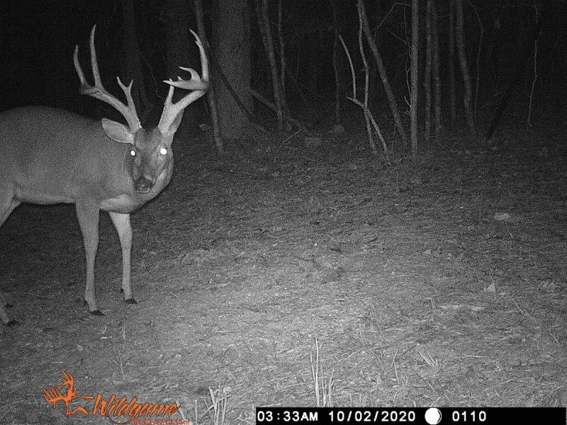Hunters on adjacent properties had trail camera photos of the Stuckey Bridge Road buck.