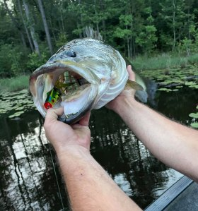 Kyle Walley's lunker bass attracted the attention of a hungry alligator.