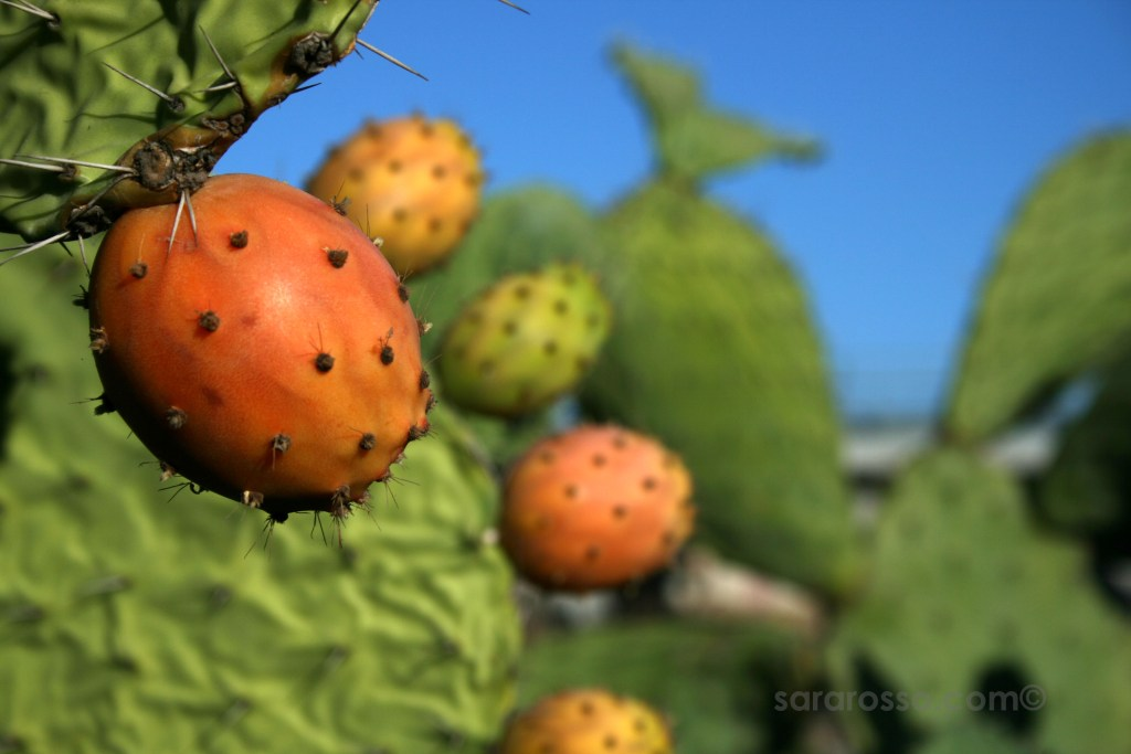 Fichi d'India, Cactus Fruits, Ms. Adventures in Italy by Sara Rosso