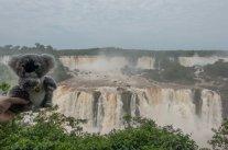 Aux chutes d'Iguaçu