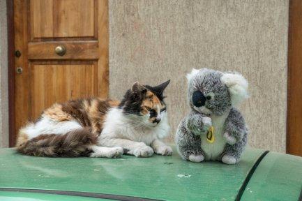 On s'est bien marrés à Valpo avec mon pote le chat