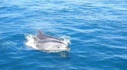 dauphins01.jpg