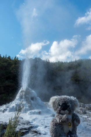Devant Lady Knox, geyser près de Rotorua