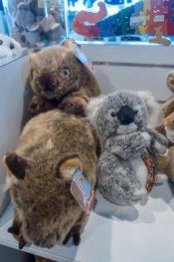 Les wombats, toujours en train de se chamailler