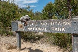 Dans les blue montains