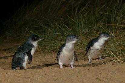 penguins6.jpg