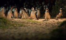 penguins7-1.jpg