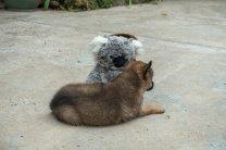 Presque aussi petit que moi ce chien !