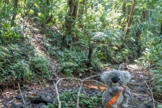 Dans la jungle au Laos