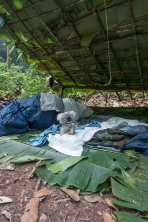 Ma tête au réveil après une nuit dans la jungle