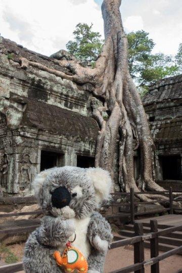 A Angkor devant un Banian : l'arbre du Bouddha