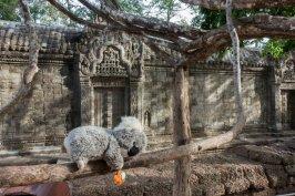 Fatiguée de visiter tous ces temples sous cette chaleur : une sieste s'impose !