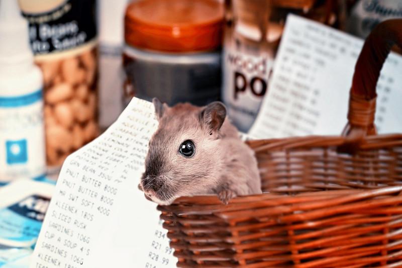 consulenza legale in diritto degli animali Avv. Martino Spimpolo a Rubano (PD)