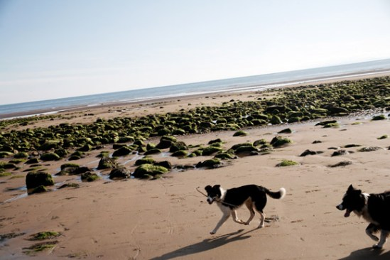 Dogs run along a beach on the coast of the Irish Sea outside St. Bees, Cumbria, England.