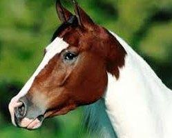 Koń 24