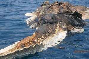 Znaczenie snu potwór morski