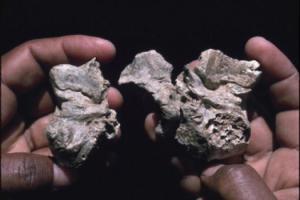 Znaczenie snu skamieliny
