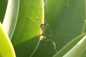 Sen o pająku