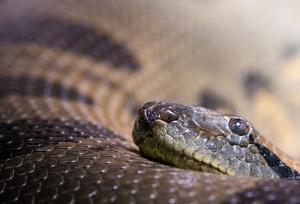 Sen o wężu