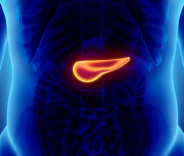 An Illustration Of The Human Pancreas