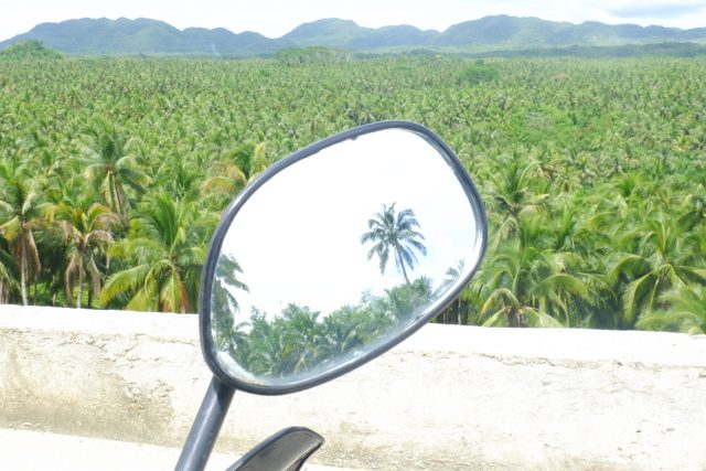 Coconut trees viewpoint in Maasin