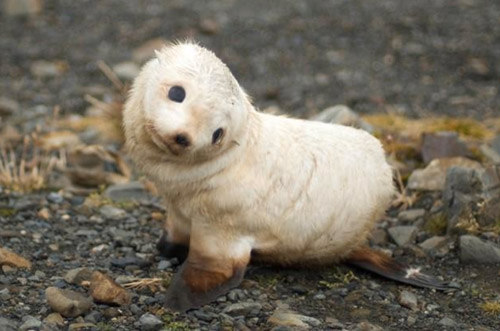 Cuddly Baby Seal