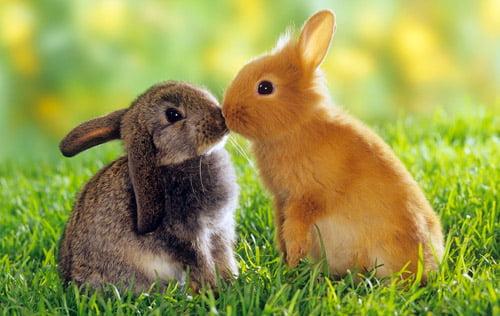 Cuddle Bunnies
